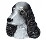 Cocker Spaniel Belt Buckle with display stand. Product code WE1